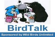 BirdTalk Fitted